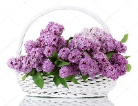 depositphotos 11319684 stock photo beautiful lilac flowers in basket
